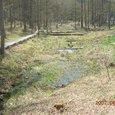 小鳥峠湿原