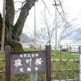 荘川桜4.28