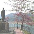 荘川桜5.5